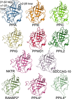 Protein family group of proteins that share a common evolutionary origin, reflected by similarity in their sequence