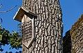 Structure for birds, Swan Lake, Saanich, British Columbia 08.jpg