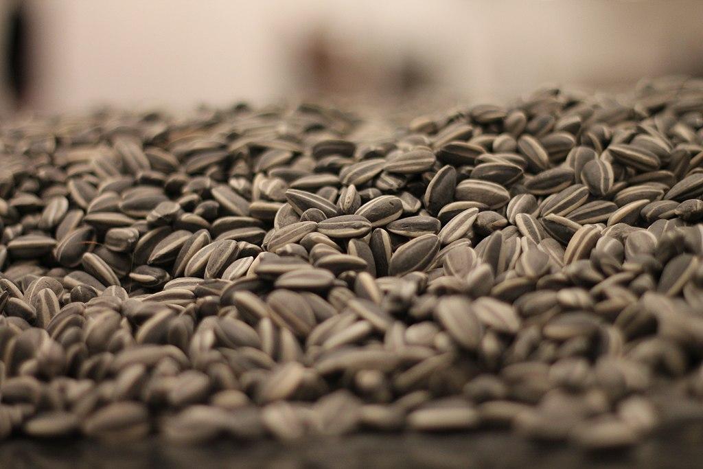 В Воронежской области запущен завод по производству семян подсолнечника