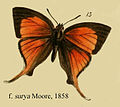SuryaMoore1858.JPG