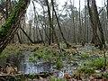 Swamp next to the Teufelsbruch swamp in winter 1.jpg