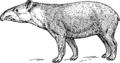 Tapir (PSF).png