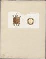 Testudo scripta - buikzijde - 1700-1880 - Print - Iconographia Zoologica - Special Collections University of Amsterdam - UBA01 IZ11600099.tif