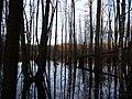 Teufelsbruch swamp at the Bäckerfurt in winter.jpg