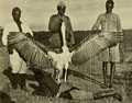 The Big Game of Africa (1910) - Giant Marabou.png
