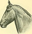 The Horse - its treatment in health and disease, with a complete guide to breeding, training and management (1905) (14763792472).jpg
