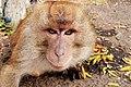 The Selfie Monkey.jpg