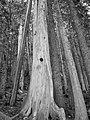 The look on a tree's face when you surprise it (B&W) (2912770051).jpg