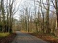 The woods on Scorcher Hills Lane - geograph.org.uk - 1065455.jpg