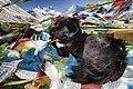 Tibet & Nepal (5162476481).jpg