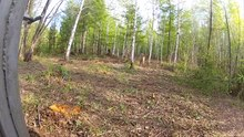 Файл:Tiger Release in Far East Russia.webm