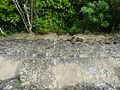 Tikal, Guatemala Laslovarga61.JPG