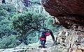 Todos se inclinan bajo el peso de las rocas (40240934513).jpg