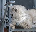 Top Cat (7576677362).jpg