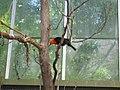 Toronto Zoo IMG 1110 (194431895).jpg
