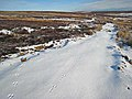 Tracks in the snow, Wolsingham Park Moor - geograph.org.uk - 322562.jpg