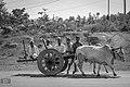 Transportation on old days.jpg