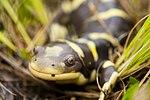 Travis AFB works to protect species 120410-F-RU983-066.jpg