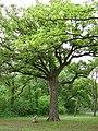 Tree-8772.jpg
