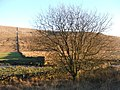 Tree in Kingsdale. - geograph.org.uk - 114375.jpg