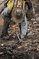 Tree planter planting trees in British Columbia, Canada.jpg