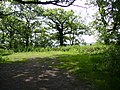 Trees - geograph.org.uk - 183511.jpg
