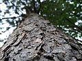 Tronco de árbol silvestre.jpg