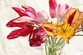 Tulip (107382161).jpeg
