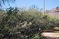 Tumacacori NHS DSC 0834 (15049288254).jpg
