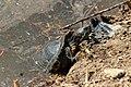 Turtle (30914535).jpeg
