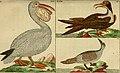Unterhaltungen aus der Naturgeschichte (1795) (14563080998).jpg