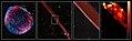 VLT VIMOS observations of the shock front in the remnant of the supernova SN 1006 (8474806801).jpg