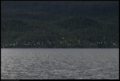 Vancouver Island - British Columbia, Canada 3.tif