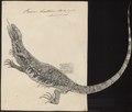 Varanus bivittatus - 1700-1880 - Print - Iconographia Zoologica - Special Collections University of Amsterdam - UBA01 IZ12400013.tif