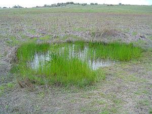 Santa Rosa Plateau - A Vernal pool.