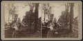 View of people, carriages and downed trees, by Camp, D. S. (Daniel S.).png