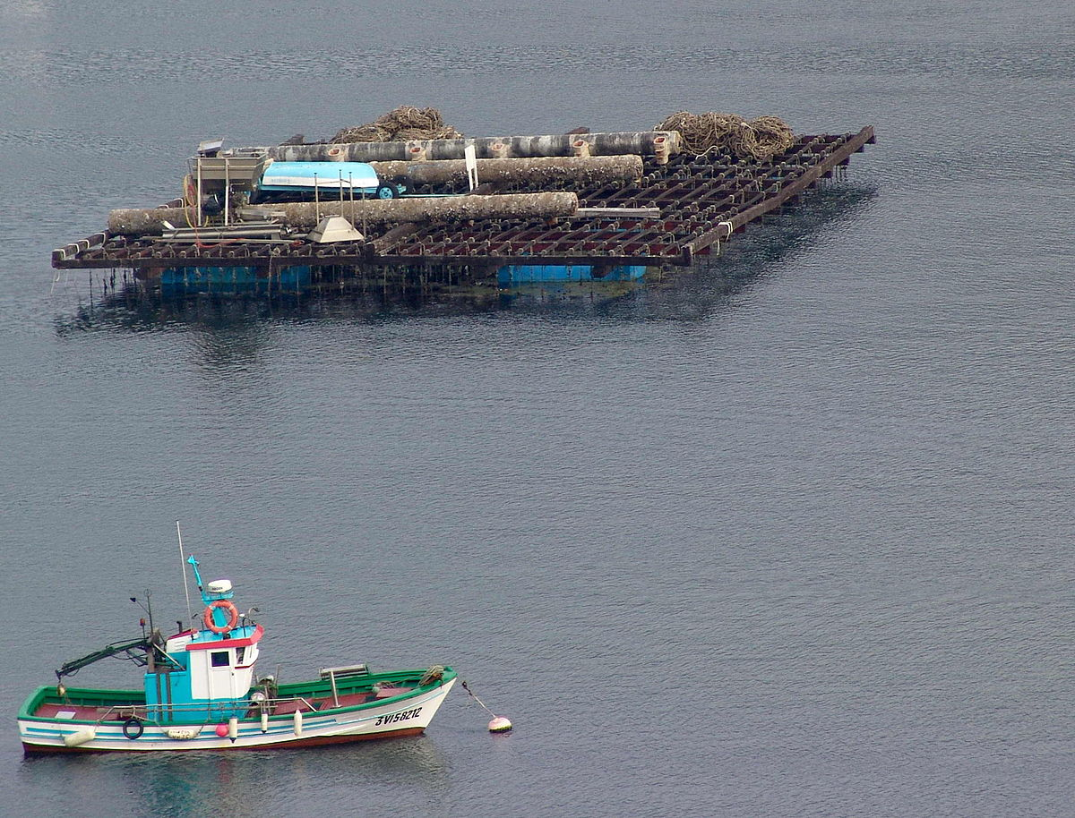 Vigo Galicia Batea e barco.jpg