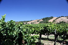 Vineyard in Anderson Valley.jpg