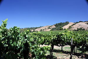 A vineyard in the California wine region of An...