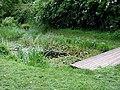 Vinny Green Wildlife Pond - geograph.org.uk - 174588.jpg