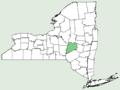 Vitis palmata NY-dist-map.png