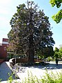 Vitoria - Campus Universitario 2.jpg
