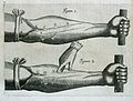 W. Harvey; Exercitatio anatomica...; valves in forearm. Wellcome L0019695.jpg