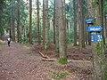Waldweg im Nussbaumer Hardt - geo.hlipp.de - 15185.jpg