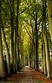 Wassenaar Street (Explored) (22352880931).jpg