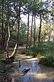 Wet woodland, Brownsea Island - geograph.org.uk - 1607222.jpg