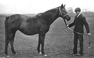 Wheel of Fortune (horse) British Thoroughbred racehorse