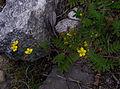Whf yellow 06.jpg