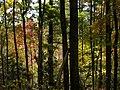 White Oak Mountain - Flickr - pellaea.jpg
