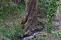 Wien-Penzing - Naturdenkmal 332 - Esche (Fraxinus excelsior).jpg